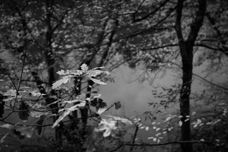 Trees of Dreams · Pont-et-Massène · Bourgogne · France · 2011