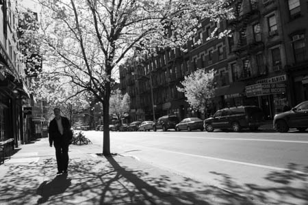 Blooming Trees on Carmine Street · New-York City · 2013