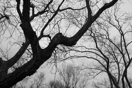 Trees of Central Park · Manhattan · New-York City · 2013
