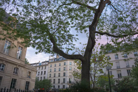 Trees Of Paris · Square du Temple · Paris · 2013