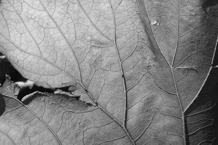 Verso · Botanical Garden · Copenhagen · 2013