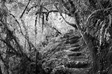 Jungle Trail · Putucusi · Aguas Calientes · Perú · 2013