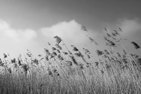 Just a Dream  · Jardin des Personnalités · Honfleur · Normandie · 2014