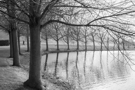 Trees & Reflections · Jardin des Personnalités · Honfleur · Normandie · 2014
