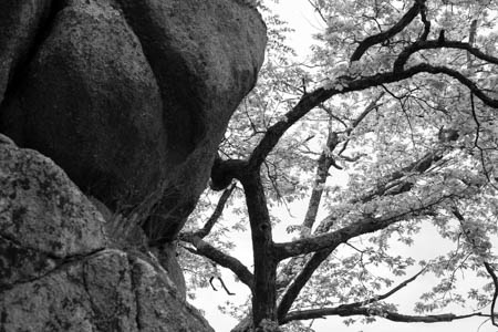 Rock & Tree · Pont-et-Massène · Bourgogne · France · 2010