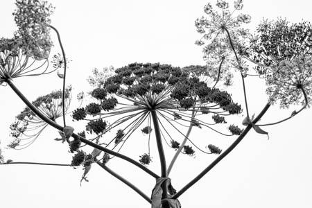 Simplified Garden · Jardins de Valloires · Baie de Somme · France · 2014