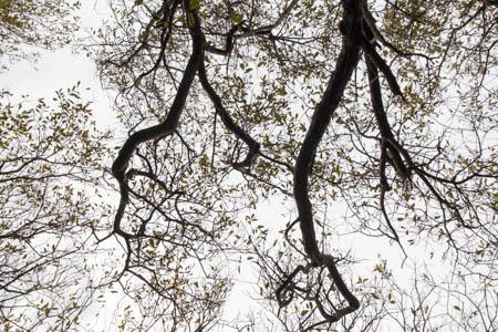 Trees on the Shore · Elgol · Isle of Skye · Scotland · 2014