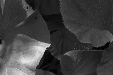 Vegetal Beam · Botanical Garden · Copenhagen · 2013