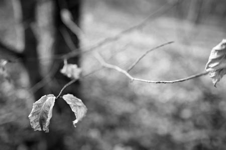 Fading Away · Forêt de Montceaux · 2015