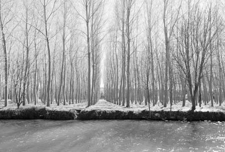 Water & Trees · Near Jarnac · Poitou-Charente · 2015