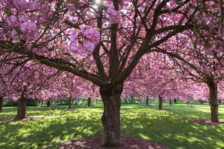 Spring Lights · Parc de Sceaux · 2015