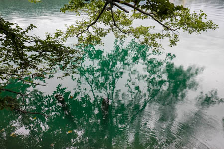 Rainy Green · Blejsko Jezero · Lake Bled · Slovenia · 2015