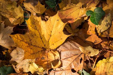 Autumn Patterns · Maison de Chateaubriand · Châtenay-Malabry · 2015