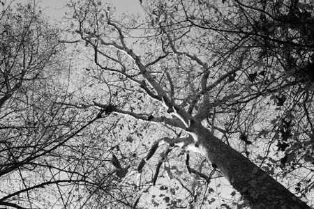 Sunlit Tree · Maison de Chateaubriand · Châtenay-Malabry · 2015