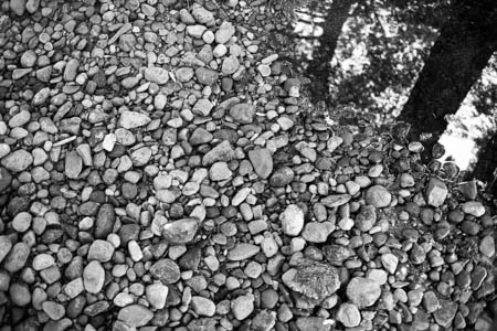 Pebbles & Trees · Inverness · Scotland · 2015