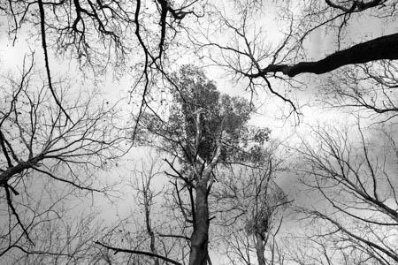New Perspective · Bois d'Aigremont · 2015