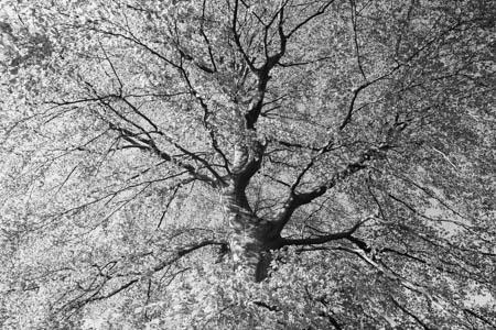 Spring Leaves · Parc de Bagatelle · Paris · 2016