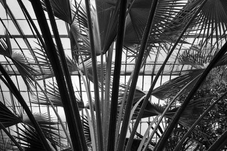 Palm Trees & Curves · Jardin des Serres d'Auteuil · Paris · 2016