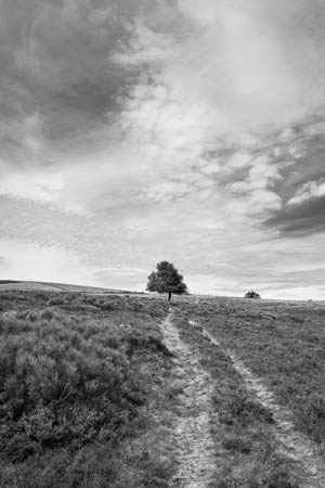 Leading to the Tree · Hautes Chaumes du Forez · Auvergne · 2016