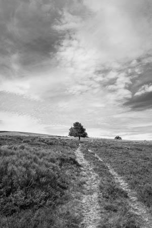 Leading to the Tree · Hautes Chaumes du Forez · Auvergne · 2016