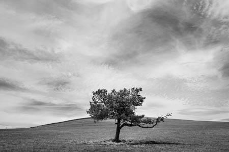 Under a Translucent Sky · Hautes Chaumes du Forez · Auvergne · 2016