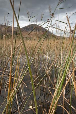 Sunlit Reeds · Loch Cill Chriosd · Isle of Skye · Scotland · 2016