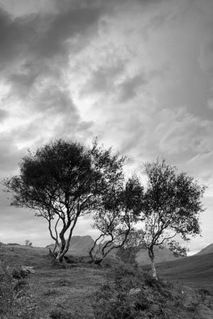 Fellow Creatures · Isle of Skye · Scotland · 2016