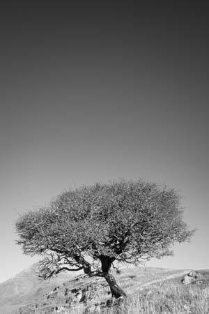 Only One Tree · Isle of Skye · Scotland · 2016
