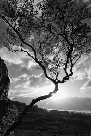 Twisted Tree · Loch Maree · Scotland · 2017