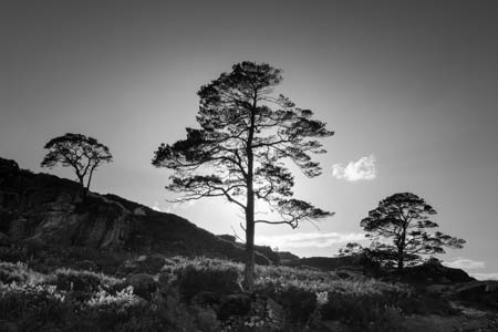 Three Trees & One Cloud · Loch Maree · Scotland · 2017