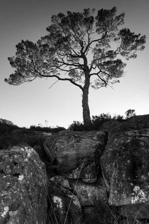 Sunlit Branches · Loch Maree · Scotland · 2017