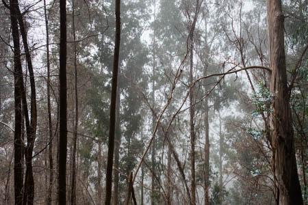 Eucalyptus Forest · Madeira · Portugal · 2017