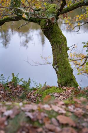 Over the Lake I · Bourgogne · France · 2017