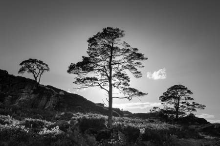 Three Trees & One Cloud · Scotland · 2017