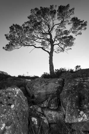 Sunlit Branches · Scotland · 2017