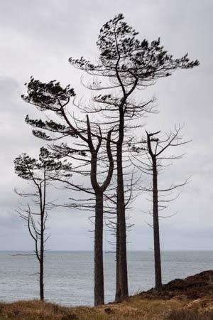 Slender Silhouettes · Gairloch · Scotland · 2018