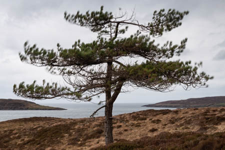 Tree, Wind, Moor · Gairloch · Scotland · 2018