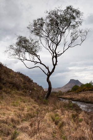 The Tree and the Mountain · Ullapool · Scotland · 2018