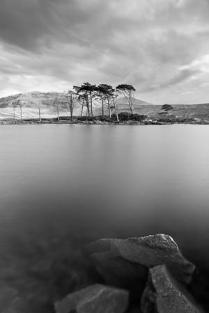 Isle of Trees · Ullapool · Scotland · 2018