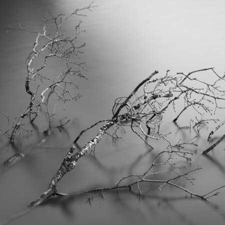 Branches on Silk · La Roche-Bernard · Bretagne · France · March 2021