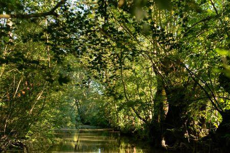 Au fil de l'eau I · Marais Poitevin · France · Juin 2021
