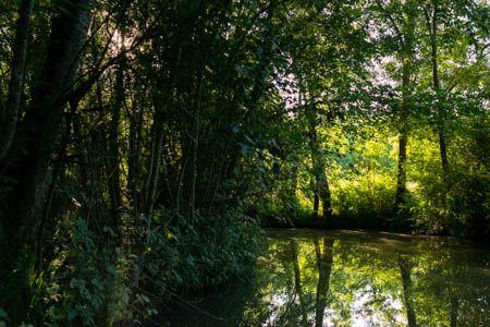 Au fil de l'eau II · Marais Poitevin · France · Juin 2021