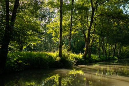 Au fil de l'eau III · Marais Poitevin · France · Juin 2021